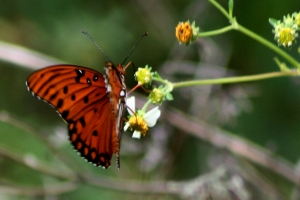 Same Butterfly With Its Appearance from above
